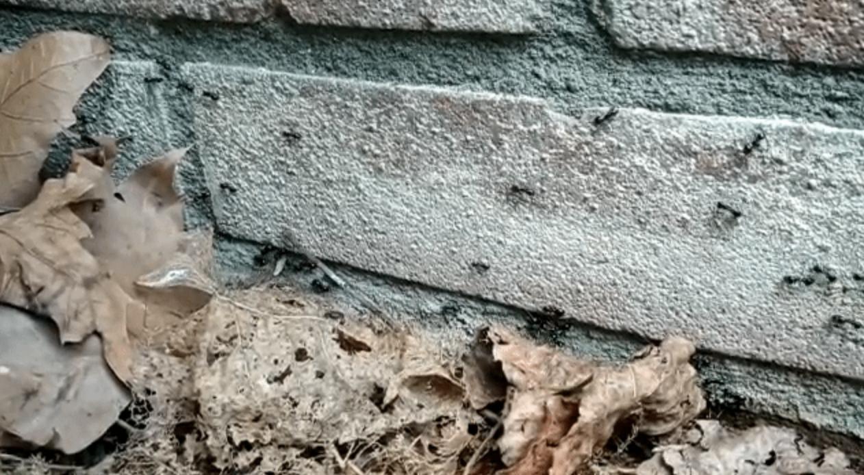 Mieren op stenen